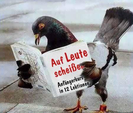 Tauben lernen